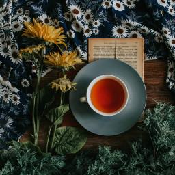 cozy autumn fall tea freetoedit