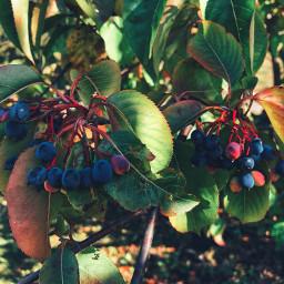nature naturephotography naturelover naturesbeauty natureporn freetoedit