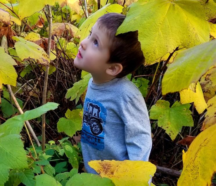 #freetoedit #boy #nature #trees #mountainview #autumn #fall
