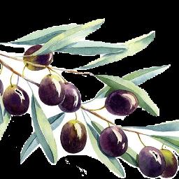 scolives olives freetoedit