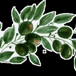 freetoedit scolives olives