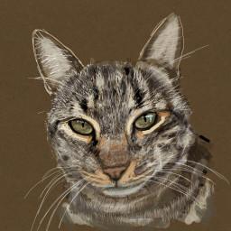 portrait mycat eyes digitalart colorpaint
