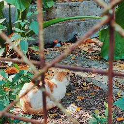 cat cute streetcat nature animal