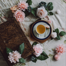 autumn fall tea cozy freetoedit