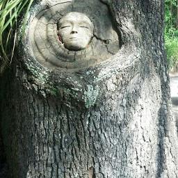 freetoedit nature tree carving treecarving