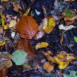 freetoedit leaves autumn october