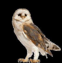 freetoedit scowl owl