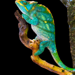 macro reptilesofinstagram chameleonsofinstagram natgeoyourshot natgeo