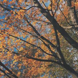 autumn autumncolors autumnleaves colorfulleaves fall