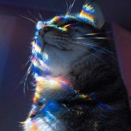 cat rainbowlight photography cute caturday freetoedit