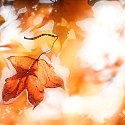 freetoedit leavesremix picsart standingalone fall