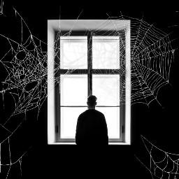 freetoedit spiderwebbrush