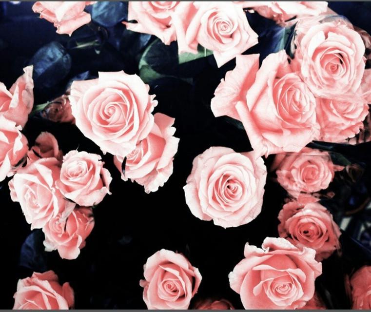 #фон #розы #фонрозы #фон_розы #цветы #фонцветы #фон_цветы
