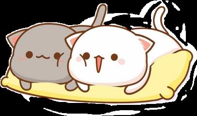 котики котята коты кошка кот freetoedit