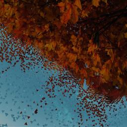 freetoedit autumn autumnleaves leaves dispersion