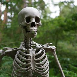 skeleton halloween freetoedit