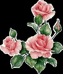 rosas floes flowers jardim garden freetoedit