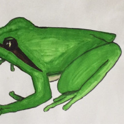 drawing frog zoeythepanda