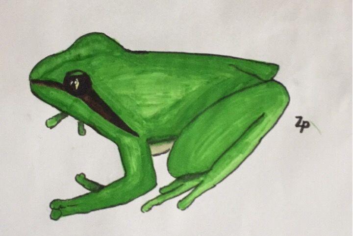 #drawing #frog    @ezriitova_ziivio @savvy_draws_a_lot @picsart @hollipolliyozza @montenegro7 @lalukia @sayoricide @killmejesus @anime_lovergirl #ZoeyThePanda