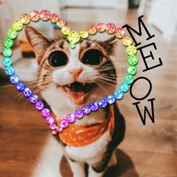 cat meow m-e-o-w freetoedit m