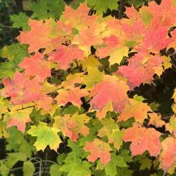 picsart fall autumnleaves autumnvibes canada freetoedit