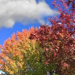 freetoedit autumncolors fallleaves trees nature