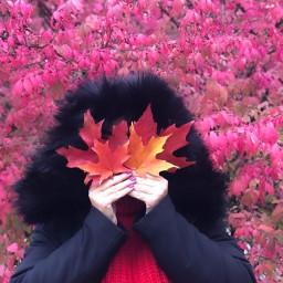 picsart fall autumnleaves autumnvibes mom freetoedit