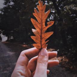 polaroid plrdeffect autumn yellowleaf trees freetoedit