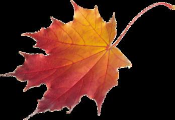 leaf autum freetoedit