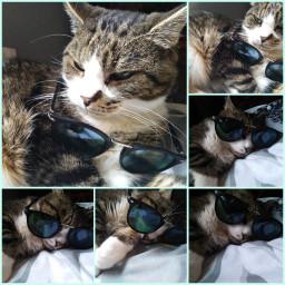 cat cute lunettes lunette mignon