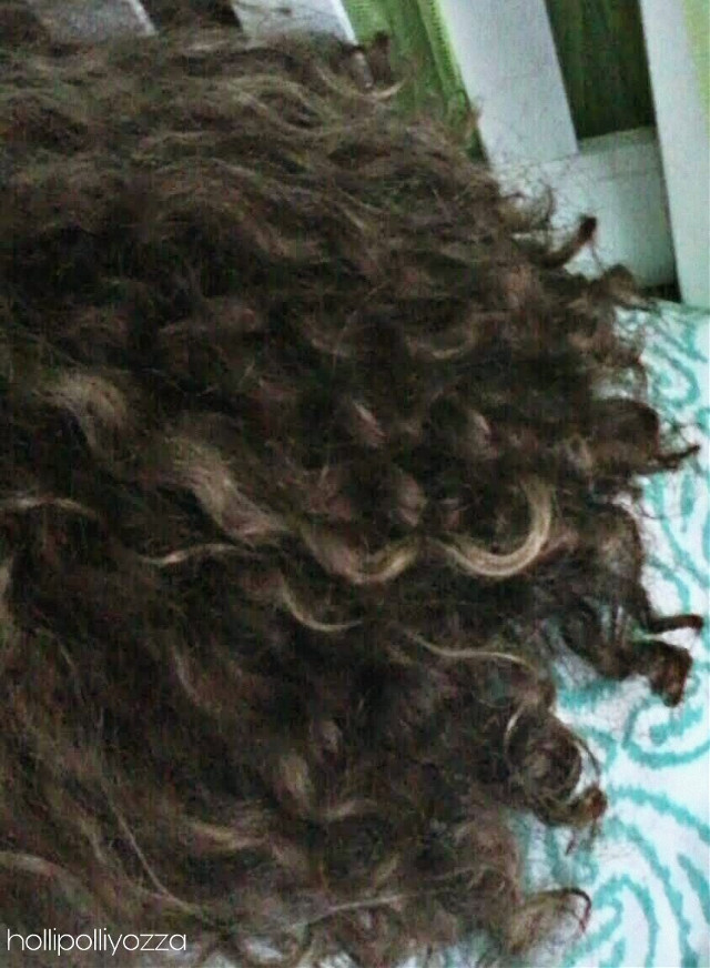 My natural wild curly hair.   This picture was taken in July But I just decided to share it with you guys.  @rozzelle @lil_riffix @vollzeit_fernweh @mikestrology @spookyxjishwa  #curly #me #hair #thickhair #curlygirl #curlyhairdontcare #naturalhair  Hollipolliyozza