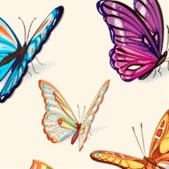 butterfly358