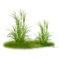 herbe green grass plant freetoedit