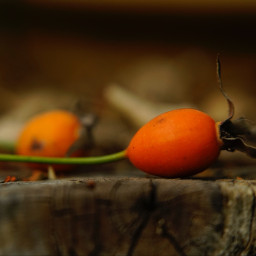 freetoedit orange photography closeup interesting