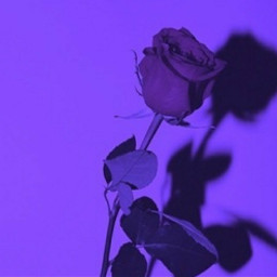 freetoedit purple aesthetic