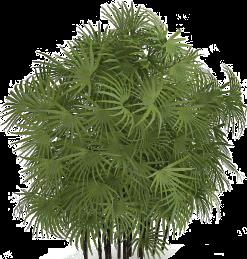 #植物#树