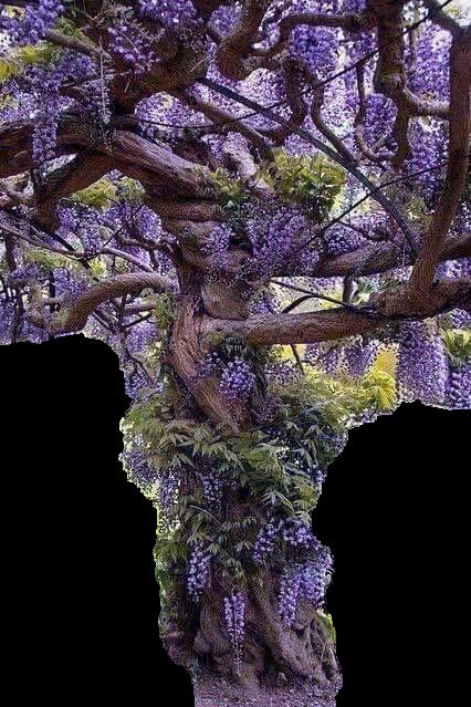 https://picsart.com/i/310410374435211?challenge_id=5dbc150c02fa78255a2a1a1e#sctreesilhouette #treesilhouette