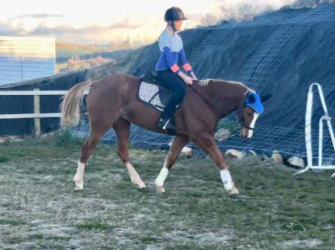 A bit of bitless work earlier this year... Banjo really likes it!!! I think he feels more free, like I'm sure many of your beautiful horses would too!! If you are considering doing this, you don't have to buy a bitless bridle, like I do in the picture above, you can just do it in a halter! #horse #bitlesswitheverybitofcontrol #dearFEIchangetherules #freetoedit