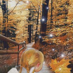 freetoedit magic woodland