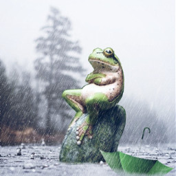 frog thinker umbrella rain rainyday freetoedit