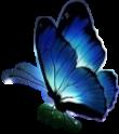 #butterfly #blue #bluebutterfly