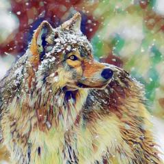 wolf_333