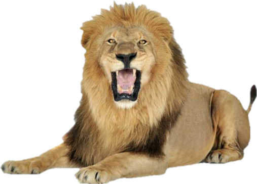 ##freetoedit #leão #selva #safari  #animais #selvagem