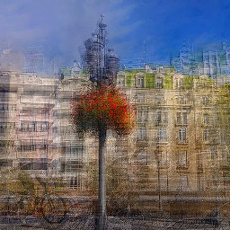 multiexposure granada flowers