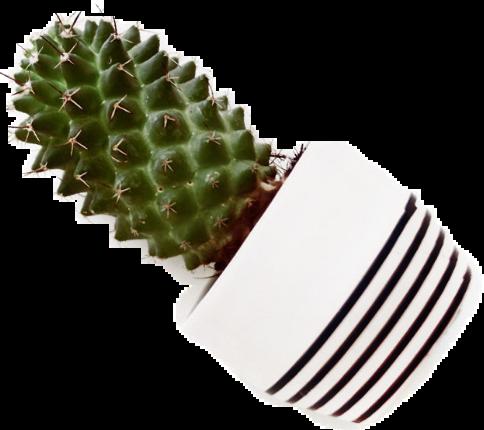 #cactus #garden #aesthetic