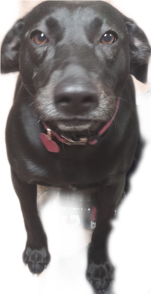 #akward Doggie