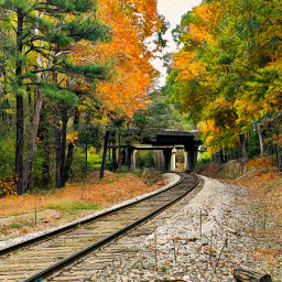 railroadtracks autumn naturephotography colorful freetoedit