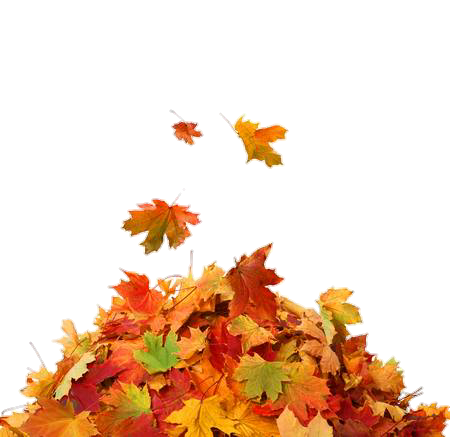 Pile of leaves #leaves #fall #thanksgiving