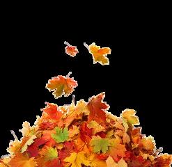 leaves fall thanksgiving freetoedit