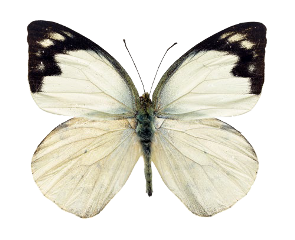 moth white pale vintage ghostcore freetoedit